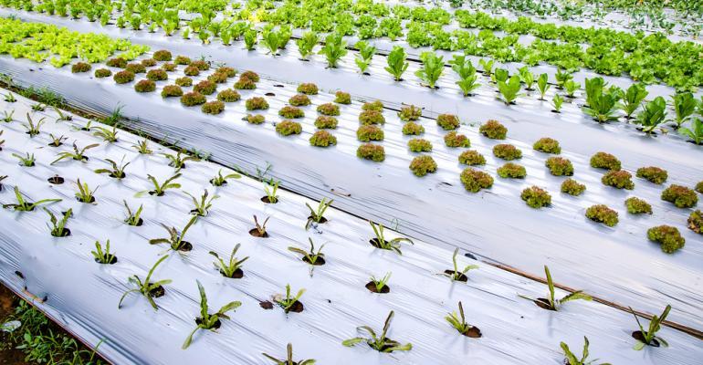 uso-plastico-agricultura-mundo-do-plastico